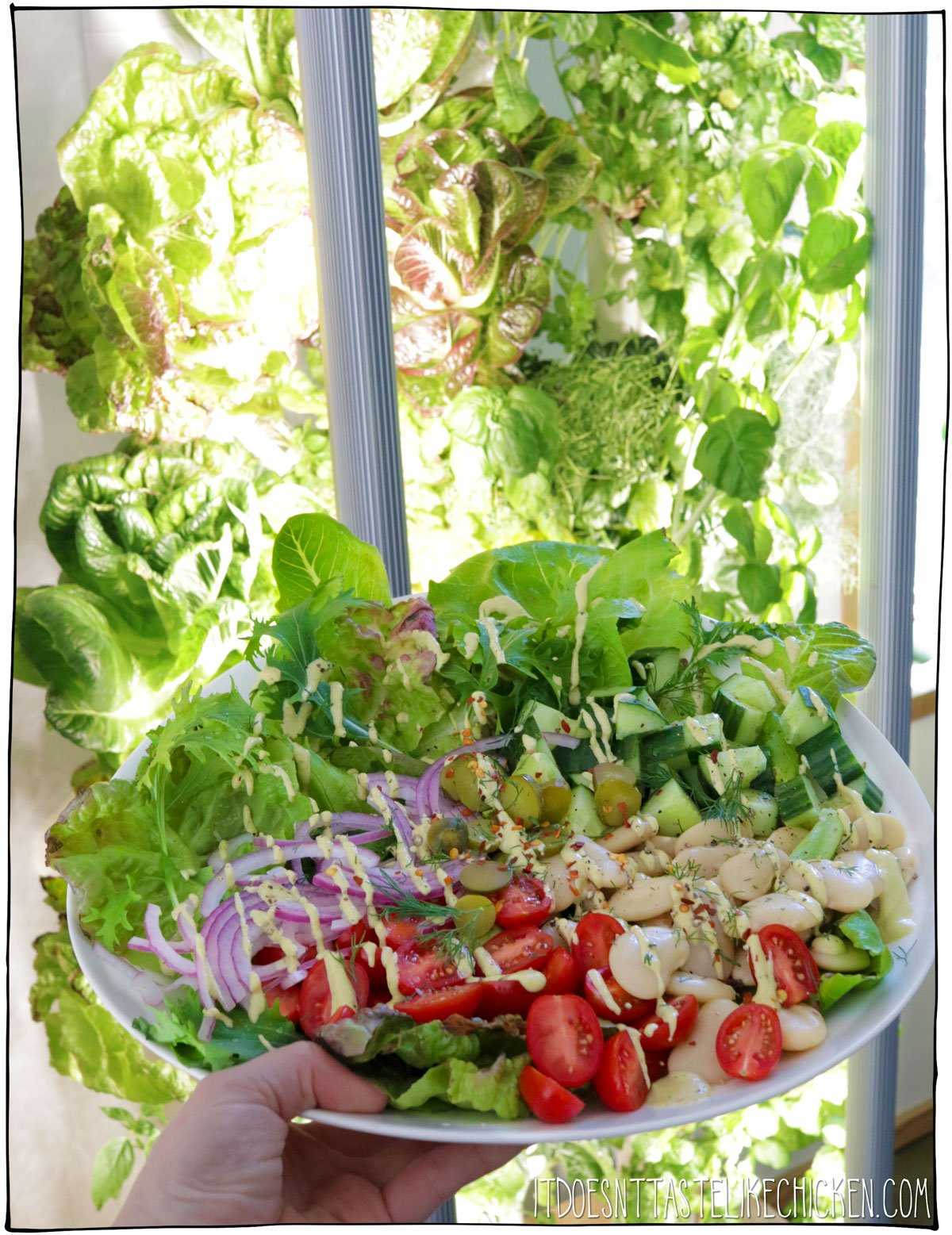 Creamy Vegan Dill Pickle Salad and Garydn Review! This salad is made using lettuce and herbs from my Gardyn at home garden tower- how cool! Hearty beans, crunchy cucumber, sweet pops of grape tomatoes, and red onions, on a bed of fresh homegrown crisp mixed greens, drizzled with my creamy dairy-free dill pickle salad dressing. Yum! #itdoesnttastelikechicken #veganrecipes #gardyn